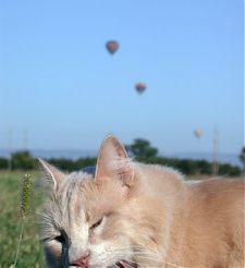 Charlie and three balloons