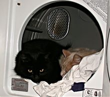Diego and Charlie in the  dryer