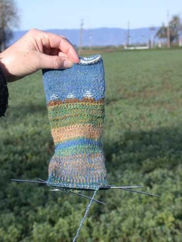 Delta socks in landscape