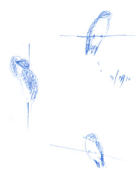 Tree swallow, prismacolor