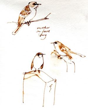 Northern Mockingbird, pen and ink