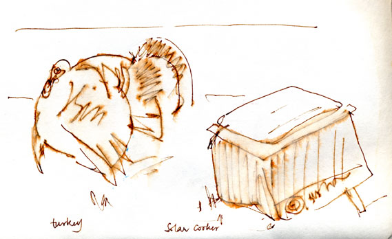 Wild turkey displaying to solar cooker, pen and ink