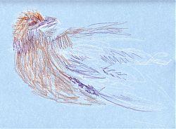 Red-tailed hawk, Derwent Coloursoft