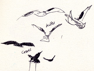 Kites and crows, pen and ink