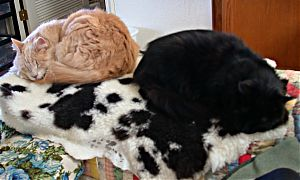 Kitties on the sheepskin