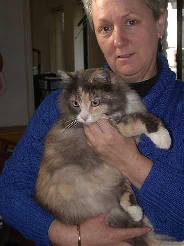 Elspeth the cat