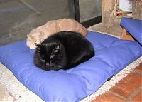 charlie & diego on the meditation cushion.