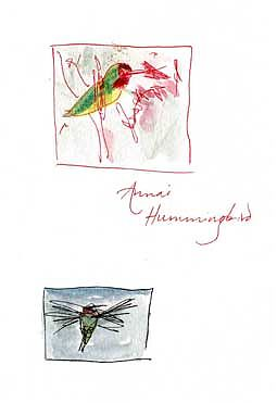 Anna's hummingbird, pen and wash