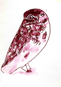 burrowing owl, pen and wash
