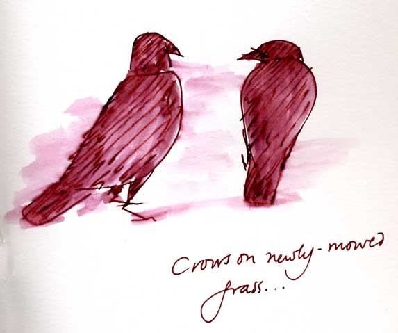 American crows: pen and ink