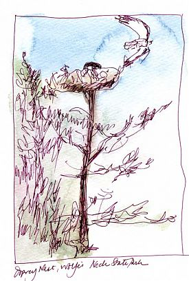 osprey nest, pen and wash