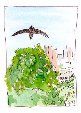 Chimney swift, pen and wash