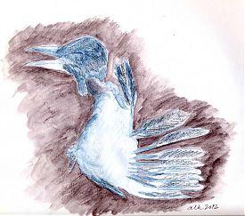 Dismembered crow fledgling, Derwent Inktense