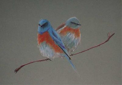 Western Bluebirds, Carbothello on Canson paper