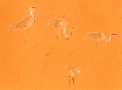 Sandhill cranes, Derwent Coloursoft on Canson