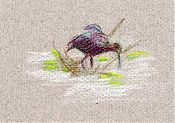 White-faced ibis: prismacolor on canson mi-teintes