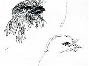 Tawny frogmouth -- pen and ink