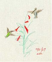 Anna's hummingbird; Derwent Colorfast on Fabriano laid