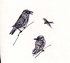 American crow: pen and ink