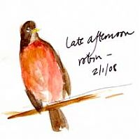 American robin, watercolor on sketch paper