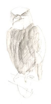 Bald eagle, derwent graphitint and wash