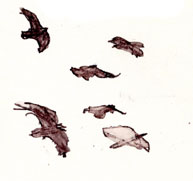 American crows, pen and ink