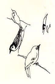 Birds at lunchtime -- pen and ink