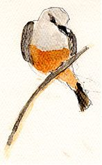 Say's phoebe, watercolor on sundance felt