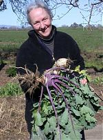 Kohlrabi and purple-topped turnip