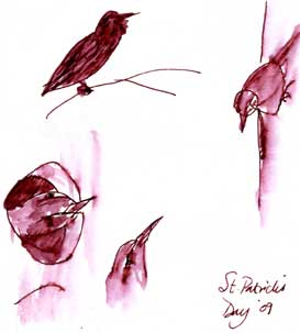 birds in ink on St. Patrick's day