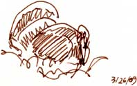 Wild Turkey -- pen and ink