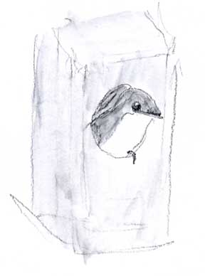 Tree swallow: prismacolor watersoluble